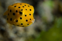 Fishes (1 of 1)-2-2.jpg