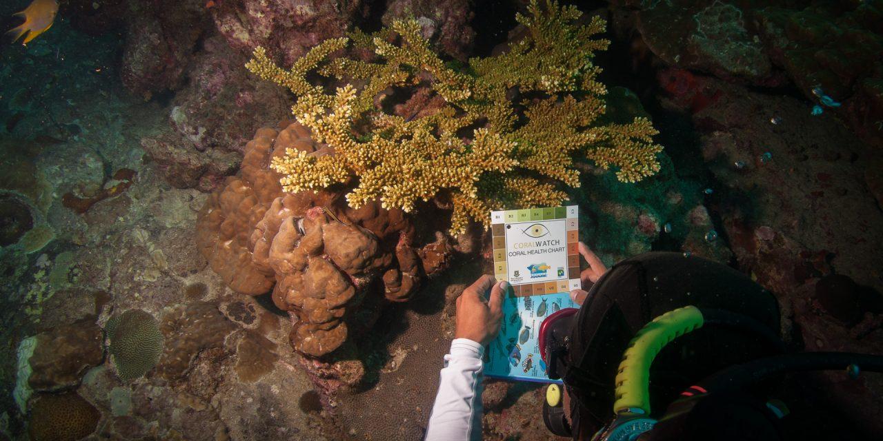 PADI Underwater Naturalist Specialty Course
