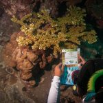 PADI Underwater Naturalist Specialty Course