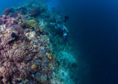 Diving Lobstar wall, Mabul Island